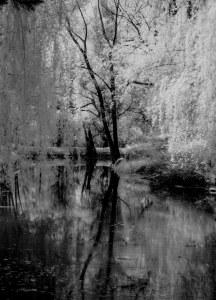 bäume und see2 (1 von 1)
