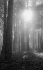 nebelwald (1 von 1)