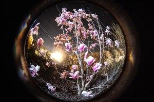 magnolietrails (1 von 1)