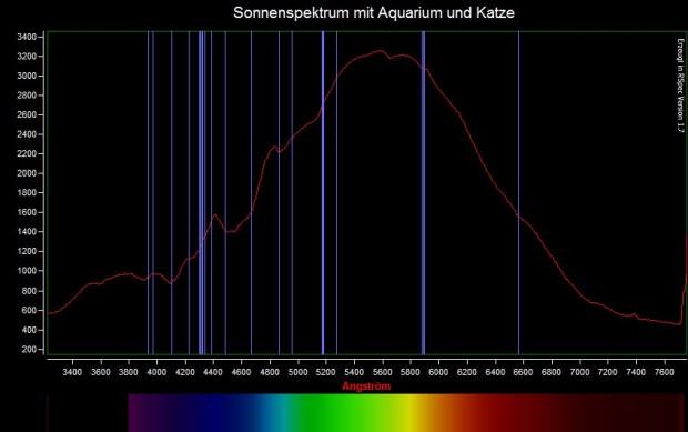Spektrum Katze