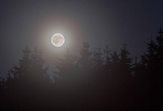 rise luna  (1 von 1)